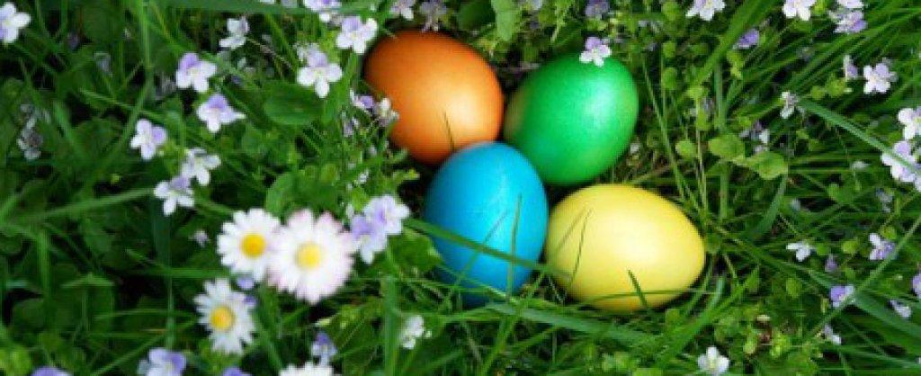 Ei - Wissenswertes und Eier Rezepte - [ESSEN & TRINKEN]