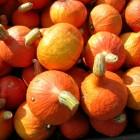 Der Hokkaido-Kürbis hat meist eine orange Schale