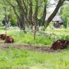 Insgesamt vier Käber wurden dieses Jahr auf dem Hof Wümmetal geboren.