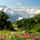 Alpen Wiese Blumen