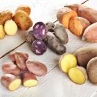 Fünf Kartoffelsorten