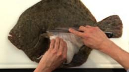 filetieren-plattfisch-schritt2