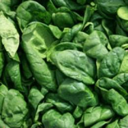 Spinat: tiefgekühlt oder frisch?