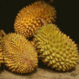 Durian: Schmeckt besser als sie riecht