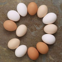 Der Osterstar: Das Ei