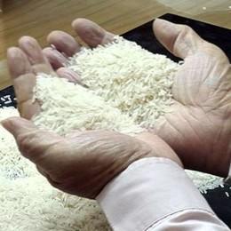 Der Reis wird geprüft