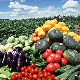 Haufenweise Gemüse ist gesund!