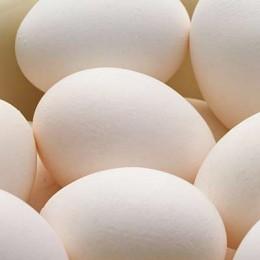 300 Eier in 72 Wochen legt das Gen-Huhn