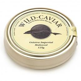 Kaviar aus Naturseezucht