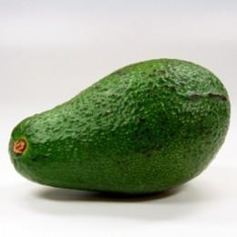Fuerte-Avocado