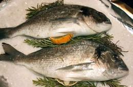 Typische Mittelmeerfische sind Doraden, Seezungen oder Rotbarben