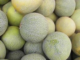 Netzmelonen auf dem Markt