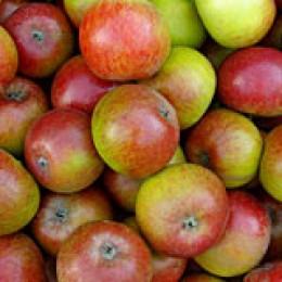 Äpfel eignen sich prima zum heimischen Dörren