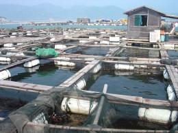 Da das Meer vor Fujian stark überfischt ist, werden viele Fische in Fischzuchten gezüchtet.