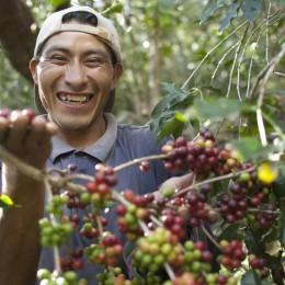 Fairtrade-Kaffeebauer aus Peru