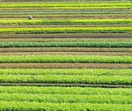 Gemüsefelder in Guangdong