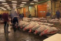 Die Tunfischauktion ist die Attraktion auf dem Tsukiji Fischmarkt