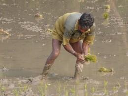 Dank eines Reis-Projekts von Brot für die Welt muss die Familie dieses Tagelöhners in Bangladesch nicht mehr hungern