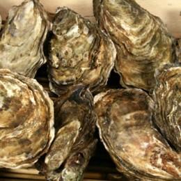 Bei vielen Feinschmeckern beliebt: Austern