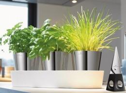 Küchenkräuter: Herbs@home