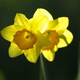 Frühling: Die Natur erwacht,, doch der Mensch fühlt sich müde