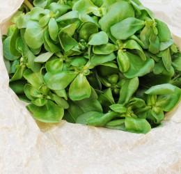 Portulak kann Gemüse oder Gewürz sein