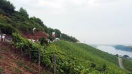 Beste Weinlage: der Rote Hang in Rheinhessen