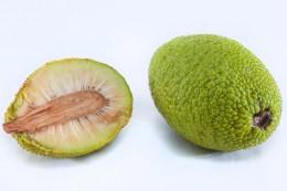 Die unreife Brotfrucht hat eine grüne Schale.
