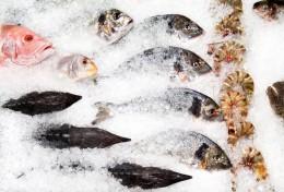 Frischer Fisch wird auf Eis gelagert