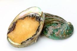 Abalone, auch als Seeohren bekannt, sind beliebte Meeresfrüchte in Südafrika