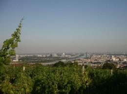 Weinanbau in Wien: Der Nussberg