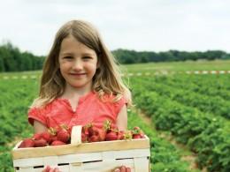 Kind Erdbeerfeld Erdbeerkorb