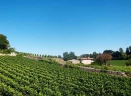 Nach wie vor gibt es Weingüter im Bordeaux, die die Trauben aufwendig per Hand verlesen lassen.