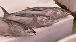 ARTE-Doku: Der letzte Fisch - Unsere Meere am Scheideweg
