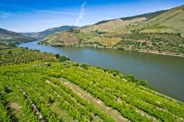 Portwein stammt aus dem Douro-Tal