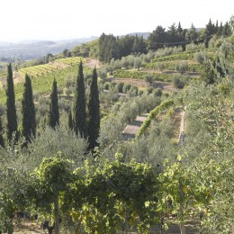 Weingut Gagliole in der Toskana