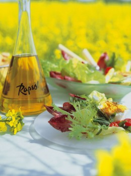 Salat Rapsöl Rapsfeld