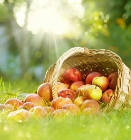 Korb mit Äpfeln Wiese