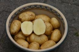 Kartoffel des Jahres 2012: Bintje