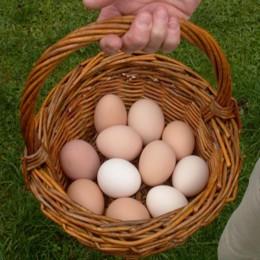 Eier im Korb