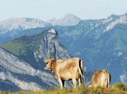 Kulinarisches von der Schweizer Alp