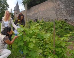 Auch Wein wird in Andernach angebaut