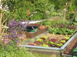 Salate selber anbauen: Schulgärten
