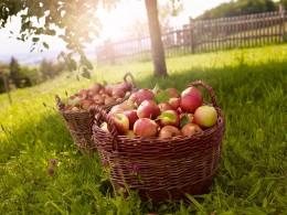 Tag des Apfels 2014