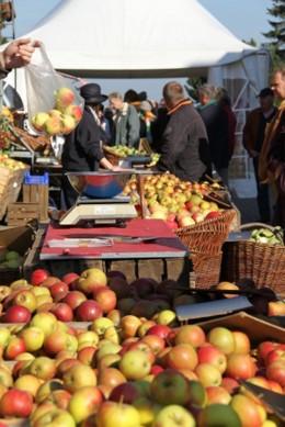 Bunte Apfelauswahl auf dem Apfel- und Kürbisfest im Alten Land