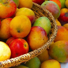 Mango in allen Farben