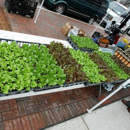Junger Salat auf dem Markt