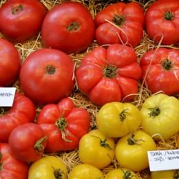 Tomaten Shah, Mikado White, Kimberly