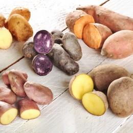 Kartoffelsorten