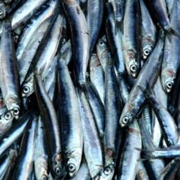 Fische auf dem Markt in Battaglia